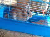 Клетка для декоративного кролика, бу